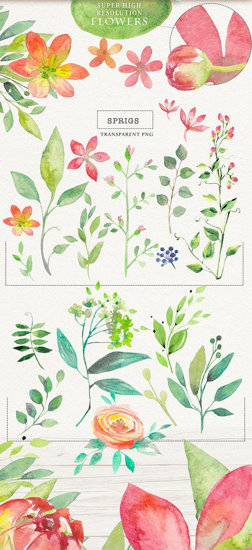 夏季素材鲜花素材装饰排列合集THE SUMMER BREEZE插图(5)