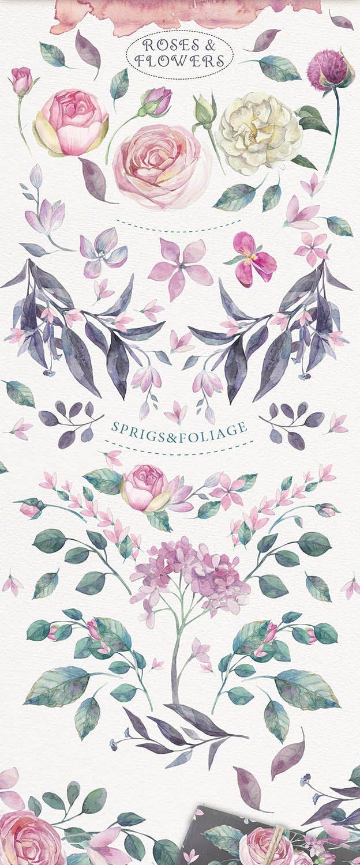 企业品牌装饰图案花卉/花圈/装饰图案The garden roses插图(6)