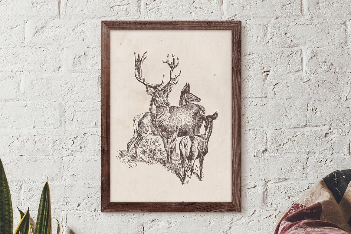 127个矢量化的各种野生动物矢量手绘风格相框装饰元素Wild Animals Engraving Illustration Set插图(7)