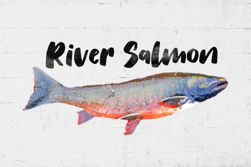 儿童书籍封面杂志手写英文无衬线字体下载Salmon Brush Font插图(2)
