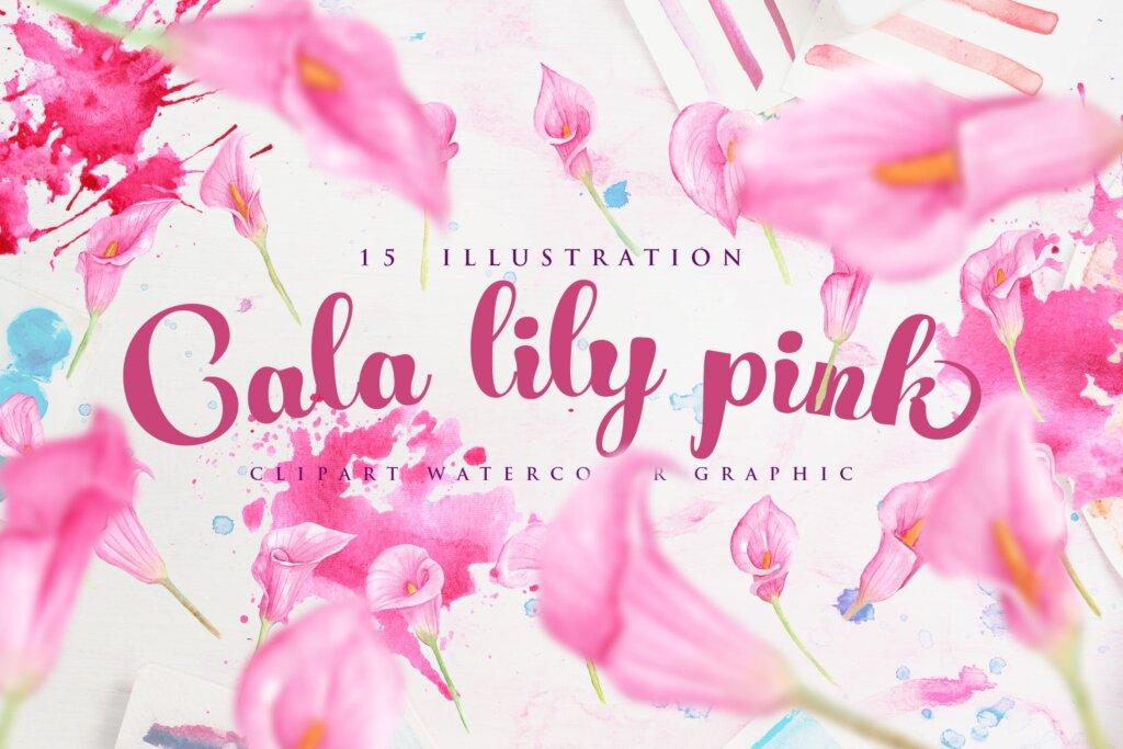 15个水彩百合粉红色花插图素材15 Watercolor Cala Lily Pink Flower Illustration插图