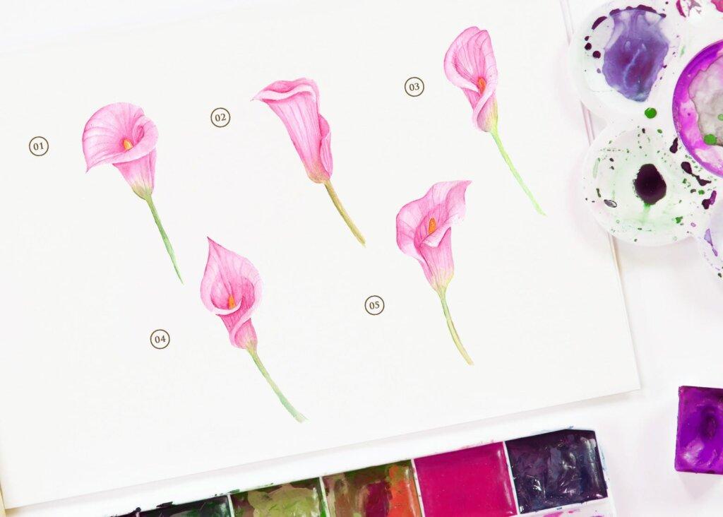15个水彩百合粉红色花插图素材15 Watercolor Cala Lily Pink Flower Illustration插图(1)