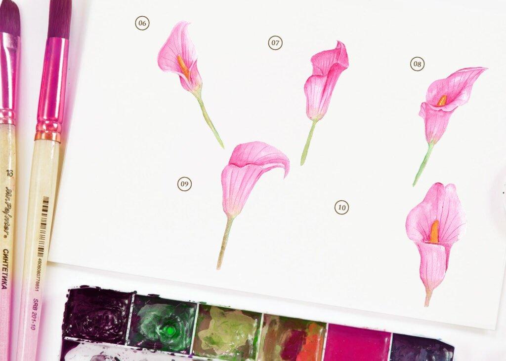 15个水彩百合粉红色花插图素材15 Watercolor Cala Lily Pink Flower Illustration插图(2)