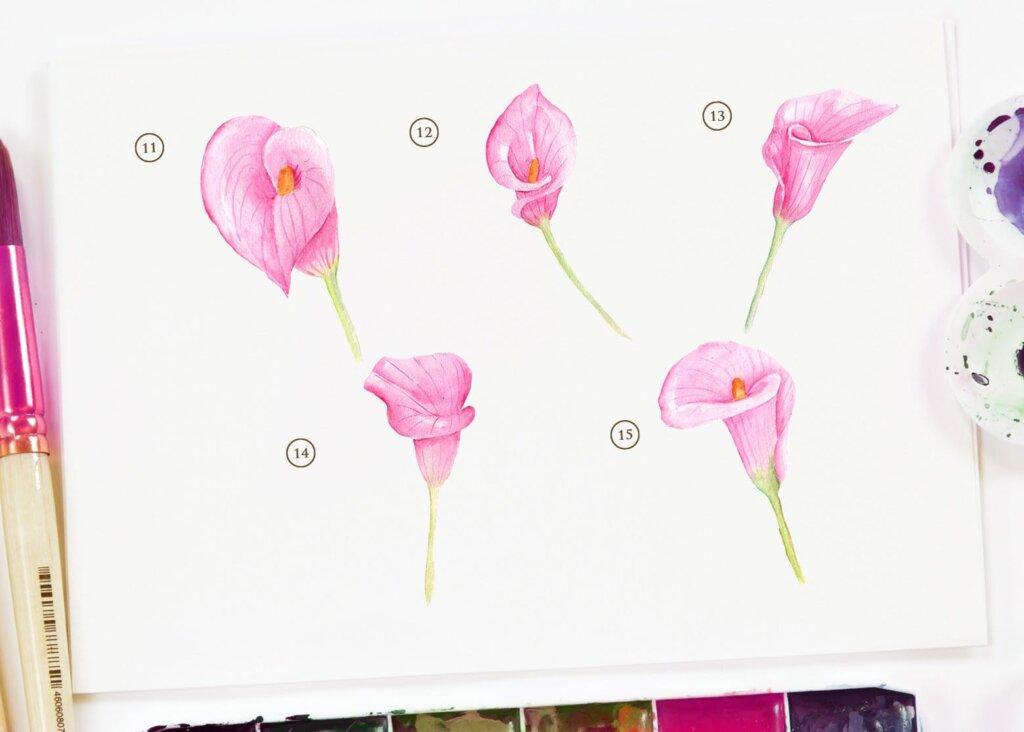 15个水彩百合粉红色花插图素材15 Watercolor Cala Lily Pink Flower Illustration插图(3)
